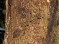 nthn_leaftail_gecko_possumvalley_2